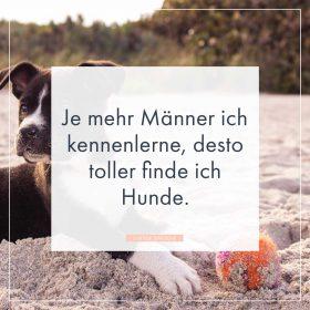 Hunde Spruche Whatsapp Status Spruche Zum Thema Hunde
